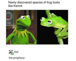 The Prophecy, Species, and Frog: Newly discovered species of frog looks  like Kermit  furr  the prophecy