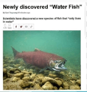 """HMm: Newly discovered """"Water Fish""""  By Sum Ting-wong 69 minutes ago  Scientists have discovered a new species of fish that """"only lives  in water""""  4 7K Save HMm"""