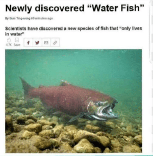 """An interesting title: Newly discovered """"Water Fish""""  By Sum Ting-wong 69 minutes ago  Scientists have discovered a new species of fish that """"only lives  in water""""  4 7K Save An interesting title"""