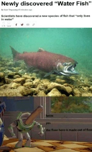 """HMMMM VERY FISHY INDEED: Newly discovered """"Water Fish""""  By Sum Ting-wong 69 minutes ago  Scientists have discovered a new species of fish that """"only lives  in water""""  f  4 7K Save  hmm  yes  the floor here is made out of floo HMMMM VERY FISHY INDEED"""
