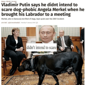 Dank, Dogs, and Memes: News> World> Europe  Vladimir Putin says he didnt intend to  scare dog-phobic Angela Merkel when he  brought his Labrador to a meeting  Merkel, who is famously terrified of dogs, kept quiet over the 2007 incident  John Hall | @johnmatthewhall | Monday 11 January 2016 | โ.]  didn't intend to scare I swear I didn't know ☭ by ImVladimirPutin MORE MEMES