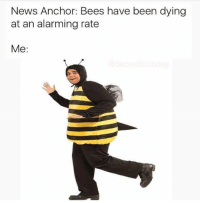 News, Nihilist, and Alarming: News Anchor: Bees have been dying  at an alarming rate  Me