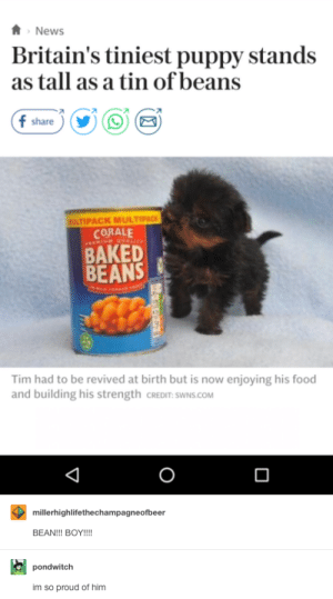 Britains tiniest puppy: News  Britain's tiniest puppy stands  as tall as a tin of beans  f share  ULTIPACK MULTIPACK  CORALE  BAKED  BEANS  Tim had to be revived at birth but is now enjoying his food  and building his strength CREDIT: SWNS.COM  0  millerhighlifethechampagneofbeer  BEAN!!! BOY!!!  pondwitclh  im so proud of him Britains tiniest puppy