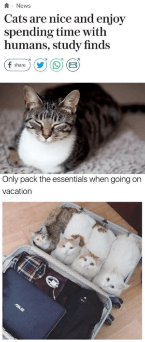 Cats, News, and Time: News  Cats are nice and enjoy  spending time witlh  humans, study finds  share   Only pack the essentials when going on  vacation
