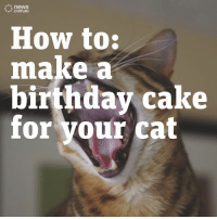 How to Make a Birthday Cake for Your Cat!: news  .com.au  How to:  make a  birthday cake  for your cat How to Make a Birthday Cake for Your Cat!