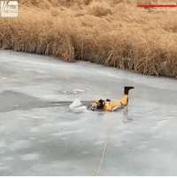 Memes, News, and Canada: NEWS Dramatic video out of Saskatchewan, Canada, shows the rescue of a dog who had fallen through the ice in a creek.