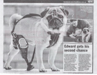 Memes, Animal Shelter, and 🤖: NEWS  FOREREAKING NEws heraldsun.com.au  Edward gets his  second chance  weltare to assistaen.  animal Shelter operators  three-legged poeeh  basbeeoame one ofthe  provide respoltible pet  nrit Melbourne animals  owmeesalpeducatiea and  to be successfully nited  eesergency assistance.  with a artinciallimb,  aseouwced the initiative.  The fund will6e open  Beglected animab will be  lcheaasecondehawee The September Goto  dpiwitgow.au for more Love this story! <3