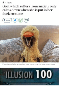 Anaconda, Instagram, and News: News  Goat which suffers from anxiety only  calms down when she is put in her  duck costume  (Fshare ) (  ) ( 9) (  It's not easy being an anxious goat CREDIT: GOATS OF ANARCHY/INSTAGRAM  ILLUSION 100