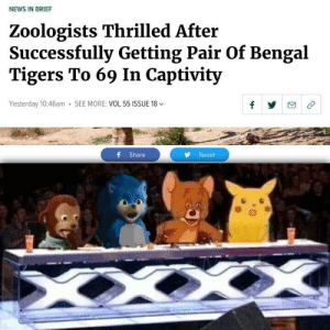 Dank, Memes, and News: NEWS IN BRIEF  Zoologists Thrilled After  Successfully Getting Pair Of Bengal  Tigers To 69 In Captivity  Yesterday 10:46am SEE MORE: VOL 55 ISSUE 18  f Share  Tweet You first had my interest, now you have my erection by Spoona101 MORE MEMES