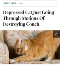 meow_irl: NEWS IN BRIEF9.4.17  Depressed Cat Just Going  Through Motions Of  Destroying Couch meow_irl