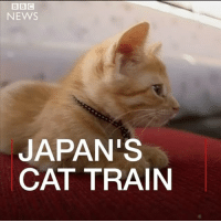 Cats, Homeless, and Journey: NEWS  JAPAN'S  CAT TRAIN 30 cats were taken on a special train journey in Ogaki in central Japan. The initiative was designed to help raise awareness of the culling of stray cats. The Cat Café, which helped to organise the event, wants to encourage people to think more about giving homeless cats a home. cat catsofinstagram kitten cattrain trains japan