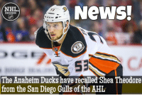 Theodore has shown that he can compete at the NHL level - Will he stick around this time? Ducks NHLDiscussion: News,  NTHILA  DISCUSSION  S3  The Anaheim Ducks have recalled Shea Theodore  from the San Diego Gulls of the AHL Theodore has shown that he can compete at the NHL level - Will he stick around this time? Ducks NHLDiscussion