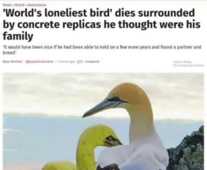Family, News, and World: News World>Australasia  World's loneliest bird' dies surrounded  by concrete replicas he thought were his  family  It would have been nice if he had been able to hold on a few more years and found a partner and  breed  Ryan Butcherryanjohnbutcher5 houls ago 01 comment meirl