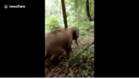 Cute, Love, and Memes: & newsflare A young elephant calf, just playing on a mud slide 😎 elephant fun votd calf mudslide happy love connected joyful cute playtime animalsofinstagram animalshavingfun