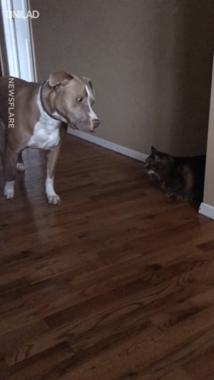 "Dank, Time, and 🤖: NEWSFLARE ""He gets this scared every time he walks past the cat..."" 😂😂"