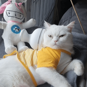 Dank, 🤖, and Cat: NEWSFLARE I NEED to get my cat one of these 🐱😍