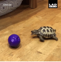 """Dank, 🤖, and Dog: NEWSFLARE  LAD  BIBL E """"Why does my tortoise think it's a dog?"""" 😂🐢"""