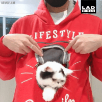 Cats, Dank, and Animal: NEWSFLARE  LAD  BIBLE  IFESTY There's no other animal quite like cats 😹😹