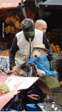 "Dank, Saw, and Rain: NEWSFLARE ""Saw this elderly man protecting his dog from the rain"" 😍🙌"