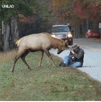 Dank, 🤖, and Elk: NEwSFLARE This photographer had a close call with an Elk that decided to attak 😱🦌