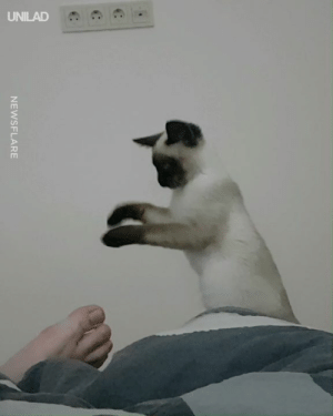 Bad, Dank, and 🤖: NEWSFLARE When your foot smells so bad your cat has to perform witchcraft on it 😂🧙‍♂️