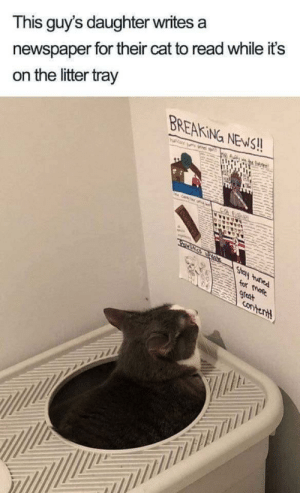positive-memes:I was having a bad morning, and then I wondered upon this. 🐈: newspaper for their cat to read while it's  on the litter tray  This guy's daughter writes a  BREAKING NEWS!!  htue ed  arkr  for mate  Ouny heas  9reat  contertt positive-memes:I was having a bad morning, and then I wondered upon this. 🐈