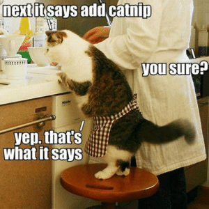 Tumblr, Blog, and Http: next it says add catnip  882  you sure:  bele  yep. that's  What it Says srsfunny:  Another Day Cooking With Kitty