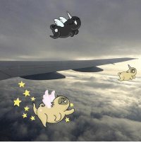Next time you are in a plane, make sure to look out for the unipugs and pugasus ❤️🦄 ................................ La proxima vez que vayas en avión, estés atent@ a pugasus y los unipugs ❤️🦄: Next time you are in a plane, make sure to look out for the unipugs and pugasus ❤️🦄 ................................ La proxima vez que vayas en avión, estés atent@ a pugasus y los unipugs ❤️🦄