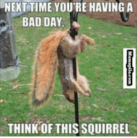 .: NEXT TIME YOU'RE HAVING A  BAD DAY.  THINK THIS SQUIRREL .