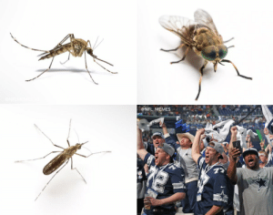 When it's summer and these annoying creatures start showing up... https://t.co/YPLMVTN9mo: @NFL MEMES When it's summer and these annoying creatures start showing up... https://t.co/YPLMVTN9mo