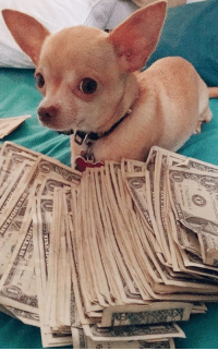 Dogs, Money, and Luck: ni  6  OLLAR  to me irl
