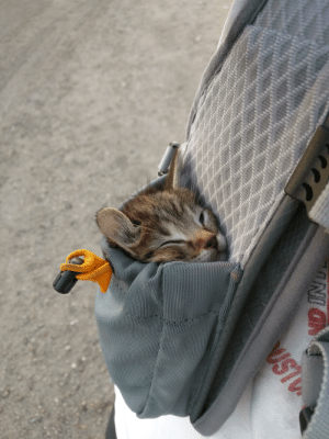 Thought, Kitten, and First: NI  UST At first I thought the kitten was snuggling with a bird in a bag, but it was just the toggle.😅