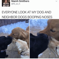 This is too much omg: Niamh Smithers  @Ni av h  EVERYONE LOOK AT MY DOG AND  NEIGHBOR DOGS BOOPING NOSES This is too much omg