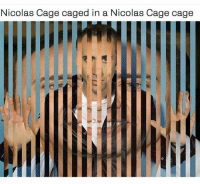Nicolas Caged: Nicolas Cage caged in a Nicolas Cage cage  IE  R7  LL