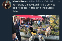 "Disney, Field Trip, and Dog: Nicole Brown @NicoleTatum26 1 d  Yesterday Disney Land had a service  dog field trip. If this isn't the cutest  thing <p>Service dog field trip via /r/wholesomememes <a href=""https://ift.tt/2H1uXyW"">https://ift.tt/2H1uXyW</a></p>"
