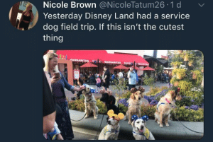 Disney, Field Trip, and Dog: Nicole Brown @NicoleTatum26 1 d  Yesterday Disney Land had a service  dog field trip. If this isn't the cutest  thing Service dog field trip