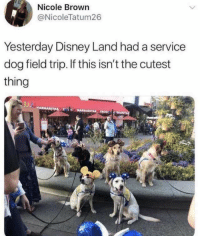 Disney, Field Trip, and Dog: Nicole Brown  @NicoleTatum26  Yesterday Disney Land had a service  dog field trip. If this isn't the cutest  thing