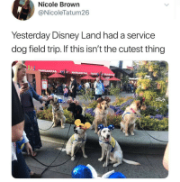 "Disney, Field Trip, and Adorable: Nicole Brown  @NicoleTatum26  Yesterday Disney Land had a service  dog field trip. If this isn't the cutest thing  WARGARITAS MARGARITAS, TACOOARITA <p>This is too adorable for me to handle via /r/wholesomememes <a href=""https://ift.tt/2GXtr3q"">https://ift.tt/2GXtr3q</a></p>"