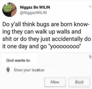 "God, Shit, and Irl: Niggaz Be WILIN  @NiggazWILIN  Do y'all think bugs are born know  ing they can walk up walls and  shit or do they just accidentally do  it one day and go ""yoooooo00""  God wants to:  Know your location  Allow me irl"