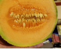 Faces-In-Things, Terror, and Night Terrors: Night Terror Melon https://t.co/rmLUY9GRKK