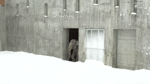 nbcnightlynews:    WATCH: The Oregon Zoo in Portland was closed to the public today due to heavy snow – but the zoo's residents had a blast.  : NIGHTL  LNEWS nbcnightlynews:    WATCH: The Oregon Zoo in Portland was closed to the public today due to heavy snow – but the zoo's residents had a blast.