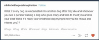 This broke my heart. why would anyone ever do this.. 😭😭: nihilistwithagoodimagination Follow  What if every dog is reincarnated into another dog after they die and whenever  you see a person walking a dog who goes crazy and tries to meet you and be  your best friend it's really your childhood dog trying to tell you he knows and  misses you??  aDogs aDog RPets NPersonal Jigs llAnimals NReincamation  300,060 notes This broke my heart. why would anyone ever do this.. 😭😭