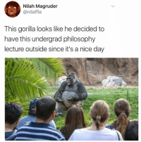 """Philosophy, Doubt, and Nice: Nilah Magruder  @nilaffle  This gorilla looks like he decided to  have this undergrad philosophy  lecture outside since it's a nice day <p>""""And so, in conclusion, there is no doubt that Brother Harambe was wrongfully executed. He is a martyr for the Gorilla Liberation cause. I&rsquo;ll take your questions now.""""</p>"""