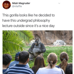 Philosophy, Truth, and Nice: Nilah Magruder  @nilaffle  This gorilla looks like he decided to  have this undergrad philosophy  lecture outside since it's a nice day Kierkegaards Subjective Truth