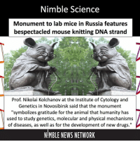 "Drugs, Memes, and Mouse: Nimble Science  Monument to lab mice in Russia features  bespectacled mouse knitting DNA strand  Prof. Nikolai Kolchanov at the Institute of Cytology and  Genetics in Novosibirsk said that the monument  ""symbolizes gratitude for the animal that humanity has  used to study genetics, molecular and physical mechanisms  of diseases, as well as for the development of new drugs.""  NIMBLE NEWS NETWORK ""The mouse is captured in the moment of scientific discovery. If you look into her eyes, you can see that this little mouse has come up with something. But the whole symphony of scientific discovery, joy, eureka have not yet been voiced,"" explained sculptor Andrew Kharkevich. NimbleScience"