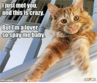 Aspca: niust met you,  and this is crazy  But Ima lover  SO  pay me baby  aspca org/spay  ASPCA