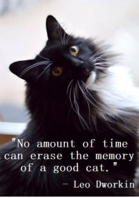 """Memes, Good, and Time: """"No amount of time  can erase the memory  of a good cat.  Leo Dworkin"""