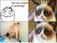 Grumpy Cat: No  Are you scared  of anything?