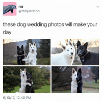 Cute, Heaven, and Memes: no  atbhjuststop  these dog wedding photos will make your  day  6/13/17, 12:40 PM Too cute 😍 A match made in heaven