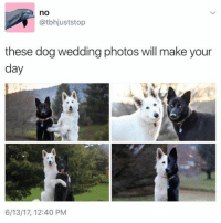 Memes, Wedding, and 🤖: no  atbhjuststop  these dog wedding photos will make your  day  6/13/17, 12:40 PM 😍😍